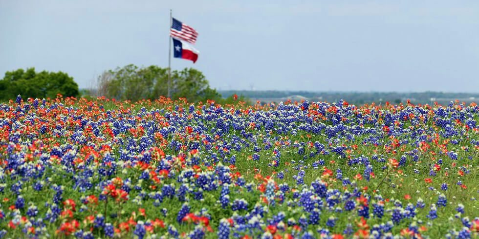 Explore Texas Wildflowers with Your Kids